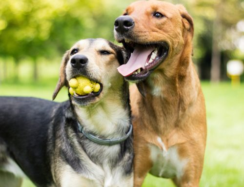 Preparing for Boarding? Doggy Daycare Can Help