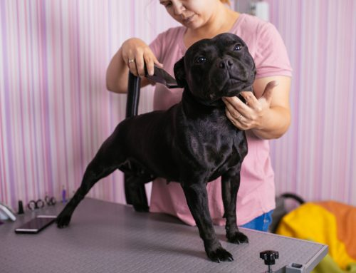 A Cut Above the Rest: Grooming Services Offered at The Pet Resort