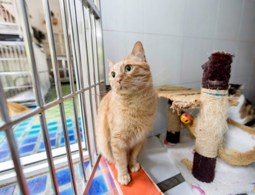 5 Tips to Prepare your Cat for Boarding