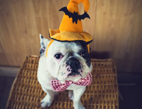 Halloween Pet Safety: Your Questions Answered