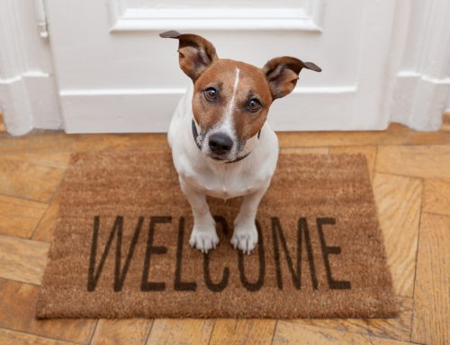 Ding Dong! 5 Tips to Keep Pets Safe When Visitors Arrive