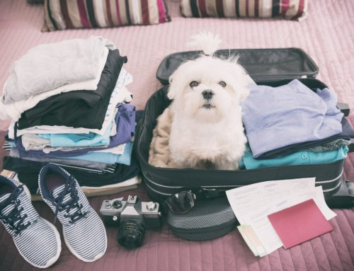 Your Go-To Holiday Travel Guide for Pets