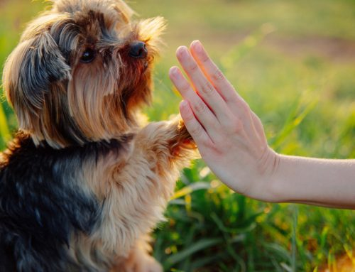 4 Tips for Successful, Stress-Free Dog Training