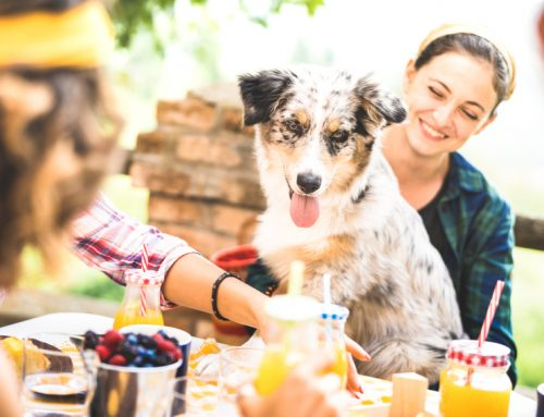5 Invigorating Activities with Your Pet