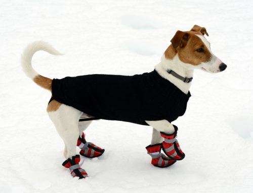 3 Tips for Exercising Your Pet in the Winter