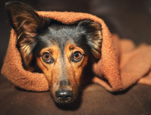 Does My Pet Have Noise Aversion? Your Questions Answered