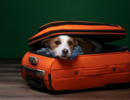 The Resort Life—5 Tips to Make Your Pet's Boarding Experience a Breeze