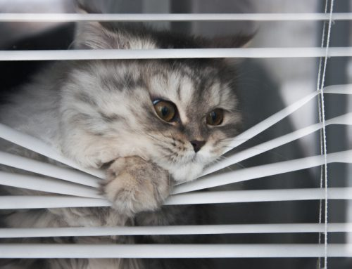 There's No Good in Goodbye—Separation Anxiety in Pets