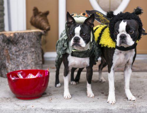 Treat 'Em Well—Pet-Safe Halloween Treats